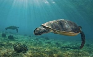 Turtles Beach in Tenerife