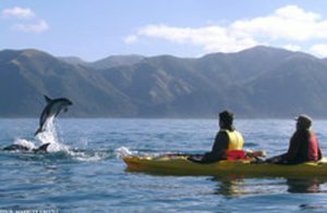 Kayak With Dolphin Tenerife